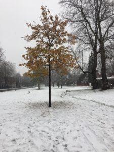 Enjoying a walk in the snow
